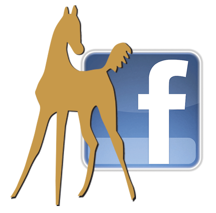 Like WarmbloodStallionsNA on Facebook