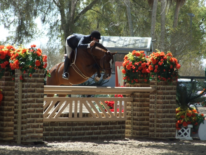 Cabardino, 2017 USEF Hunter Sire of the Year